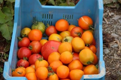 2015-09-05 - Marché fermier Havrenne (45) (1024x683)