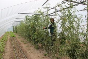 2015-09-05 - Marché fermier Havrenne (47) (1024x683)