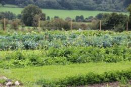 2015-09-05 - Marché fermier Havrenne (53) (1024x683)