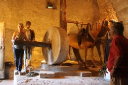 Château de Magrin - Musée du Pastel - La plante est écrasée à la meule